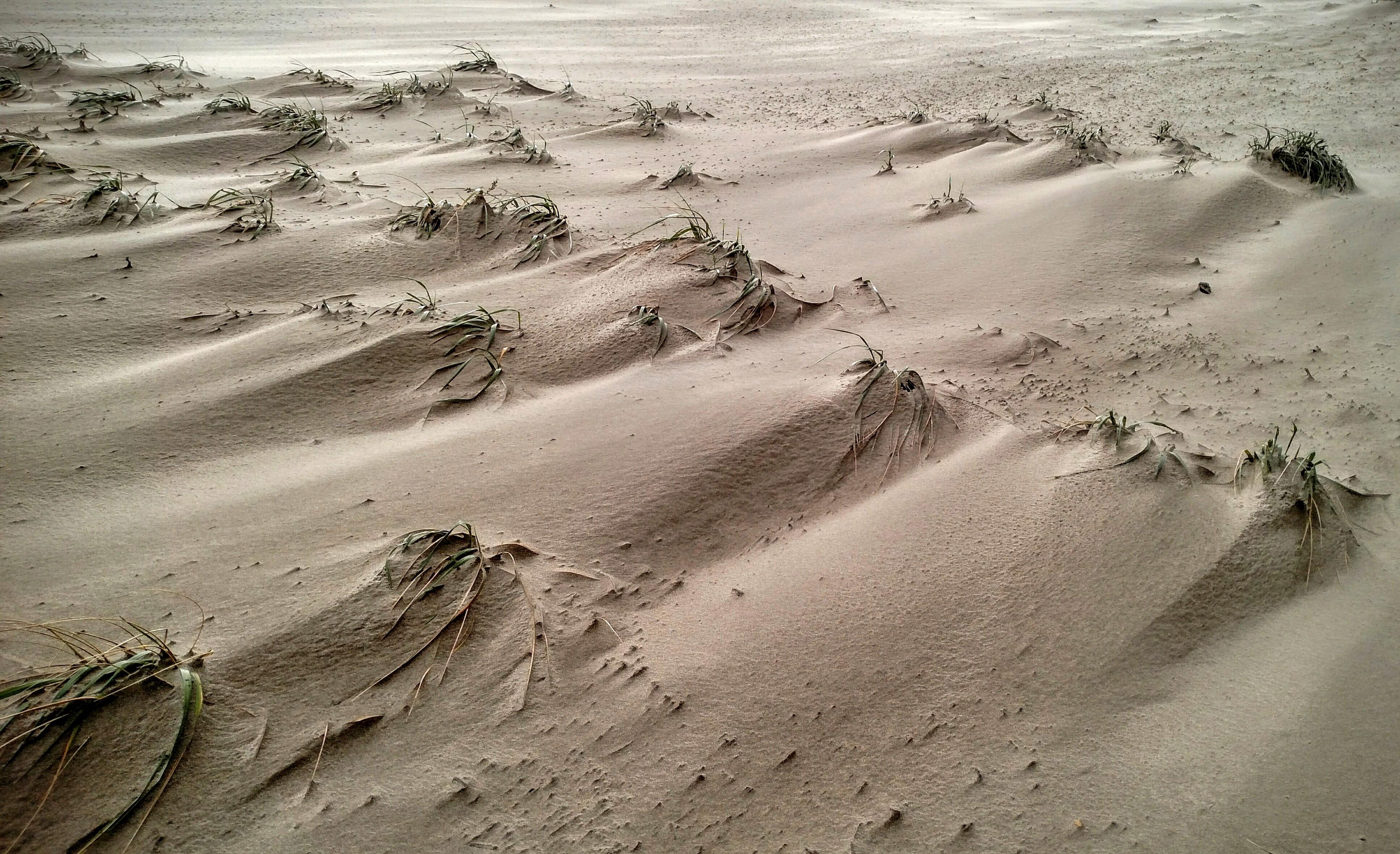 Windblown Beach