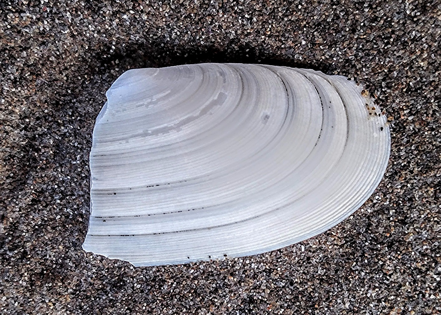 Clamshell