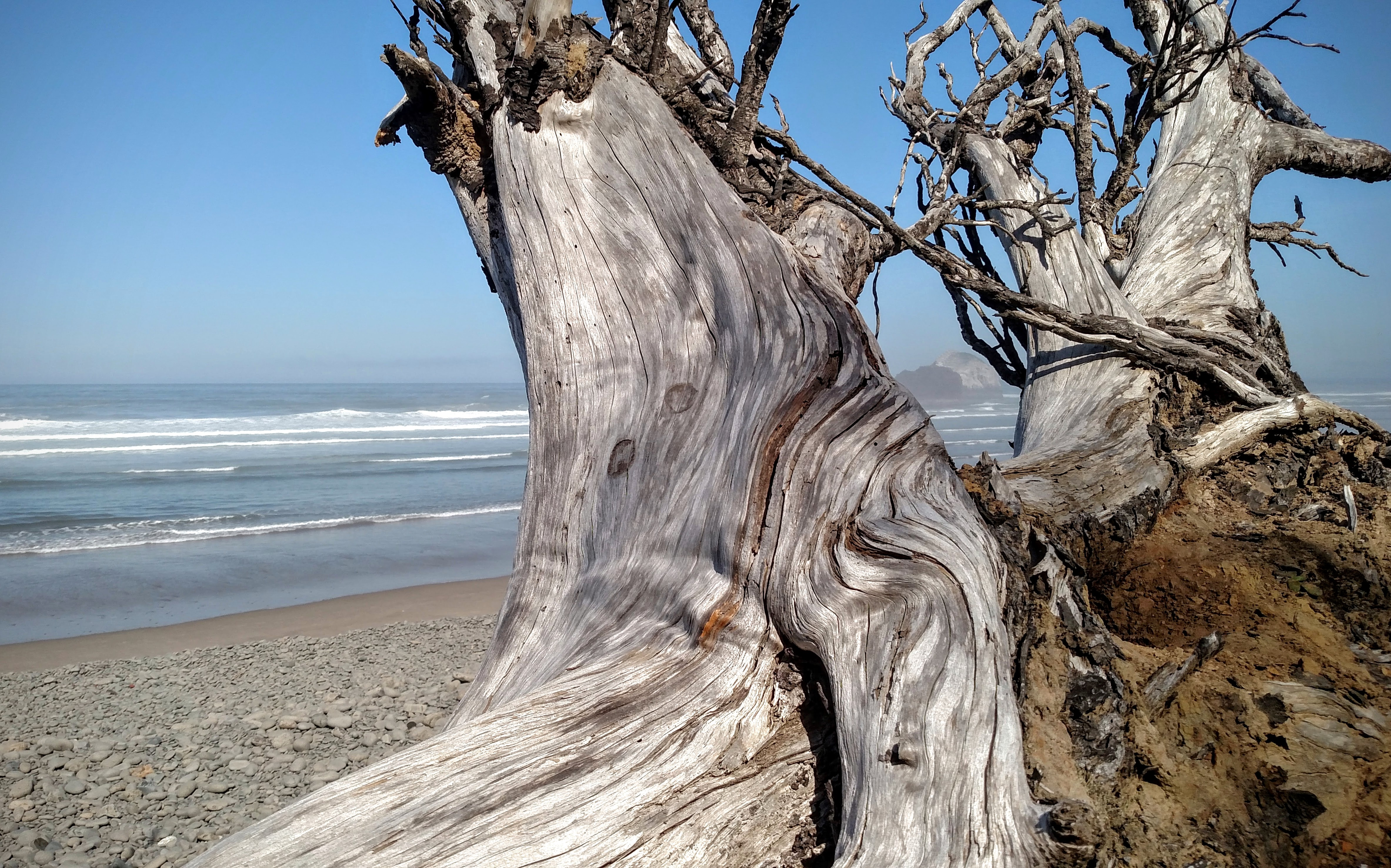 Driftwood at Falcon Cove
