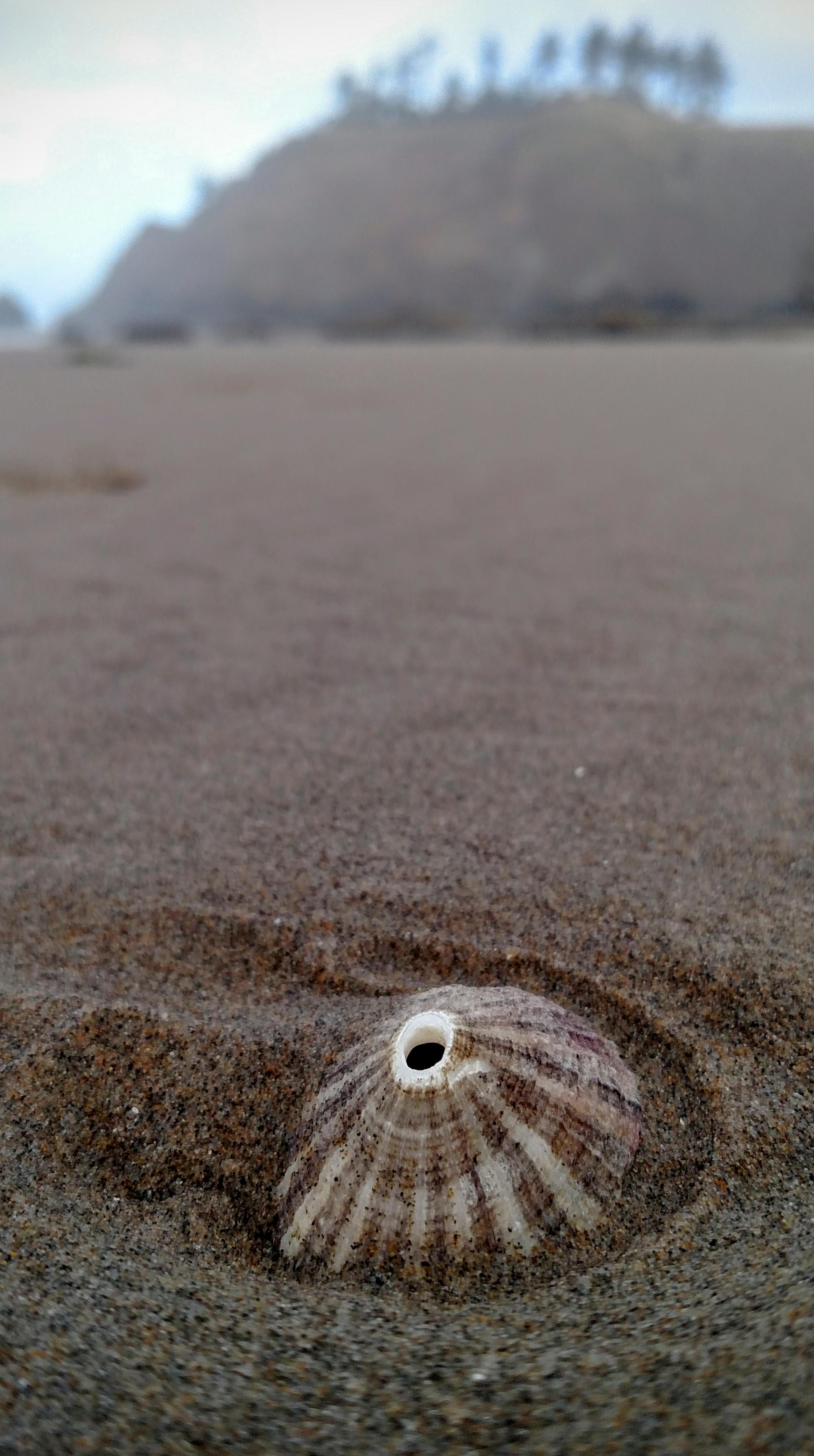 Keyhole Limpet