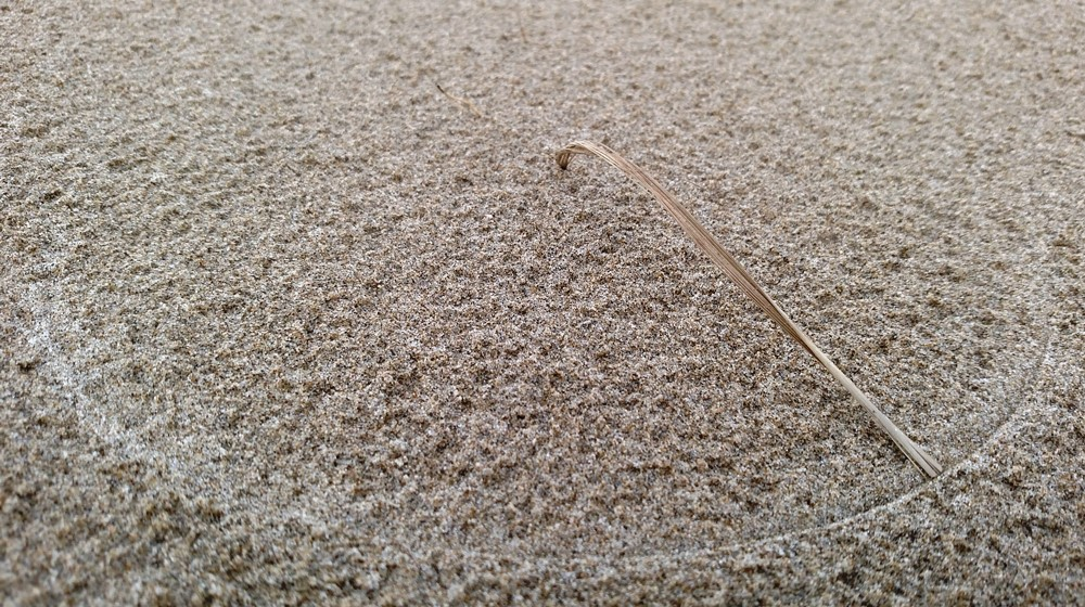 Windblown Grassblade Scratching Semicircle in the Sand