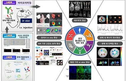 DD + Bio-Imaging.png