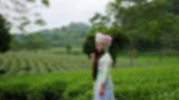 Miss Miao auf einer Teeplantage in Vietnam