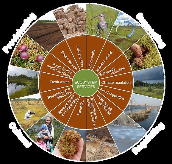 Ecosystem services 2.tif