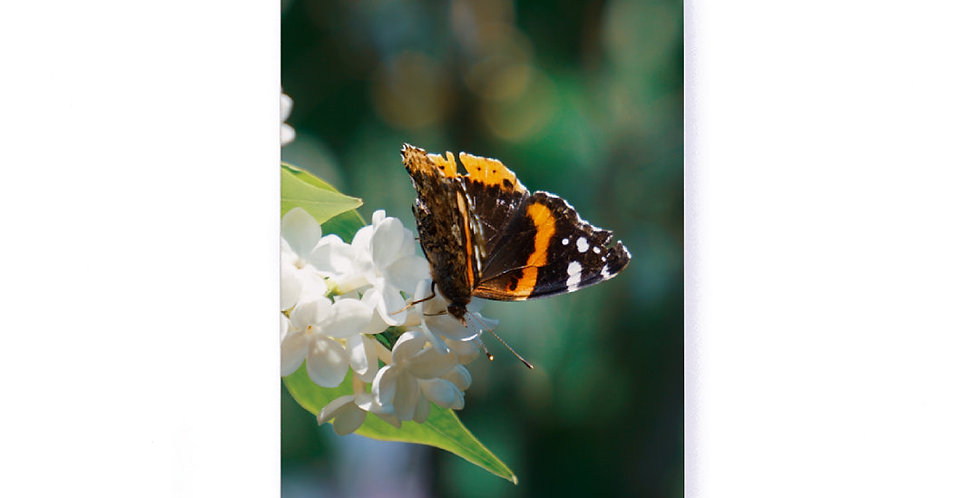 "Butterfly Softcover Notebook 5.25"" x 8.25"" with Dot Grid Pages"