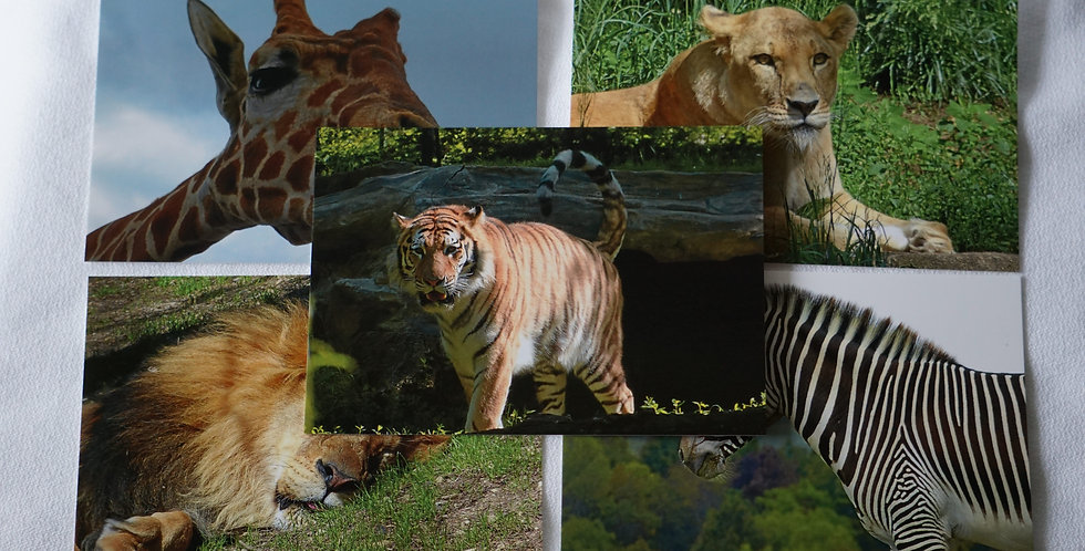Safari Postcards Set of 10 Variety Pack | Stationery