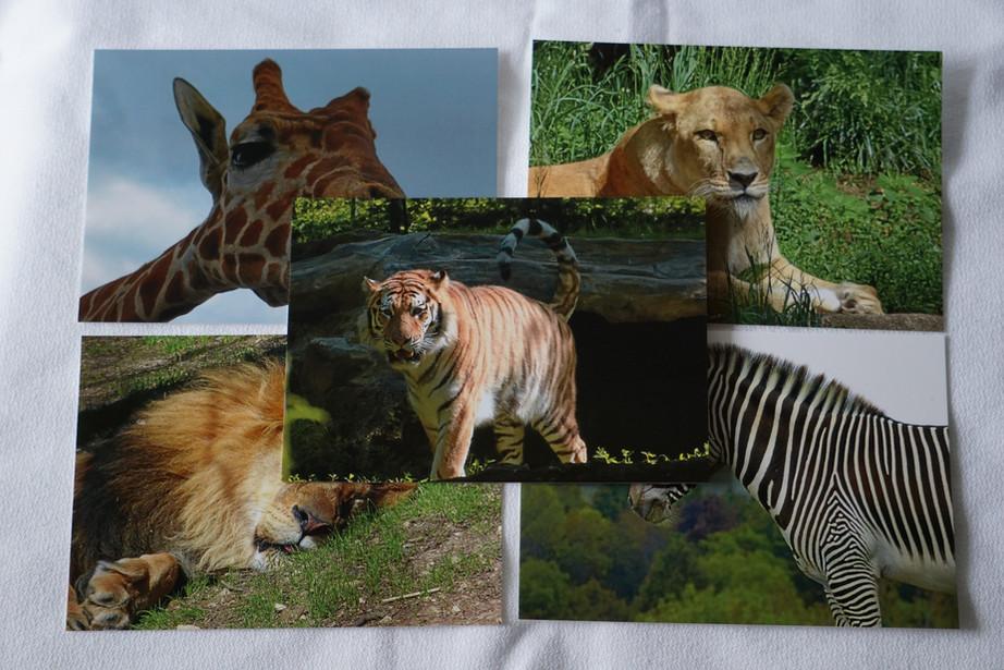 SafariPostcards.JPG
