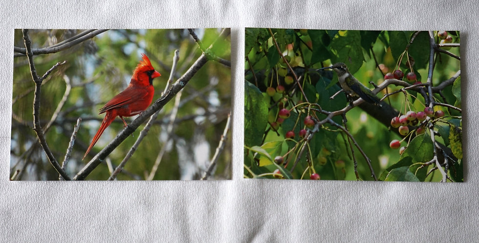 Cardinal and Hummingbird Postcards Set of 10 Variety Pack   Stationery