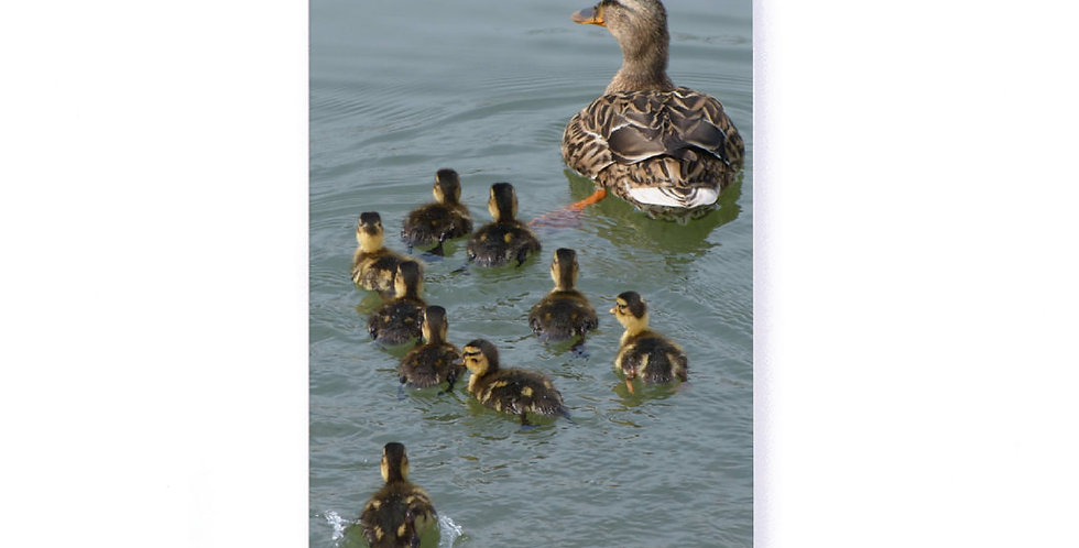 "Duck with Ducklings Softcover Notebook 5.25"" x 8.25"" with Dot Grid Pages"
