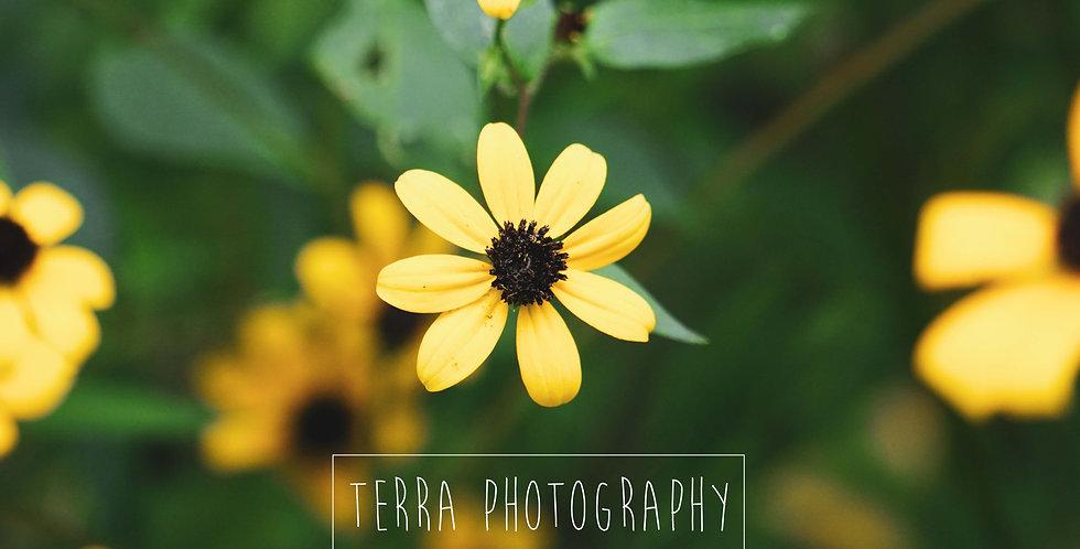 Little Yellow Flower Print