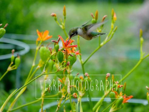 HummingbirdInAction_Marked.jpg