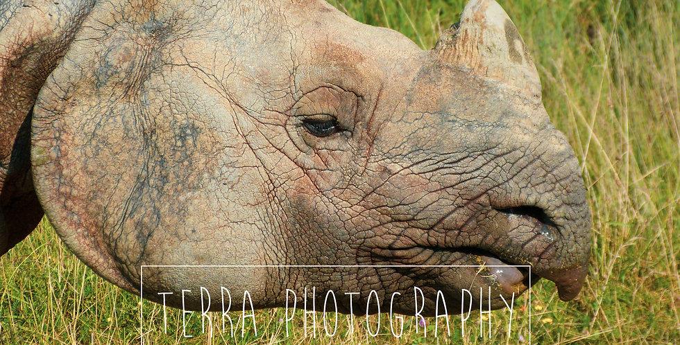 Rhino Head Print