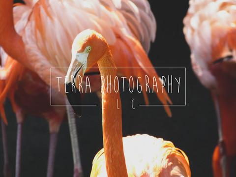 Flamingo_marked.jpg
