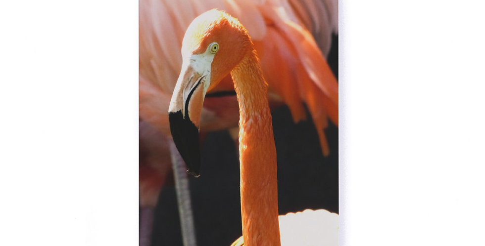 """Flamingo Softcover Notebook 5.25"""" x 8.25"""" with Lined Pages"""