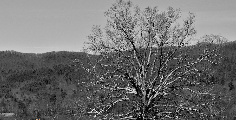 Lone Tree Print
