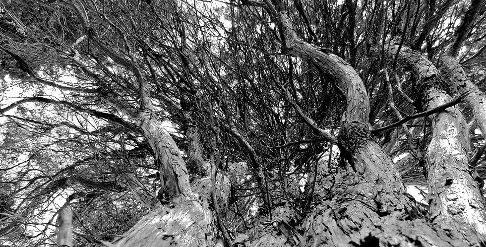 Grayscale Tree Print