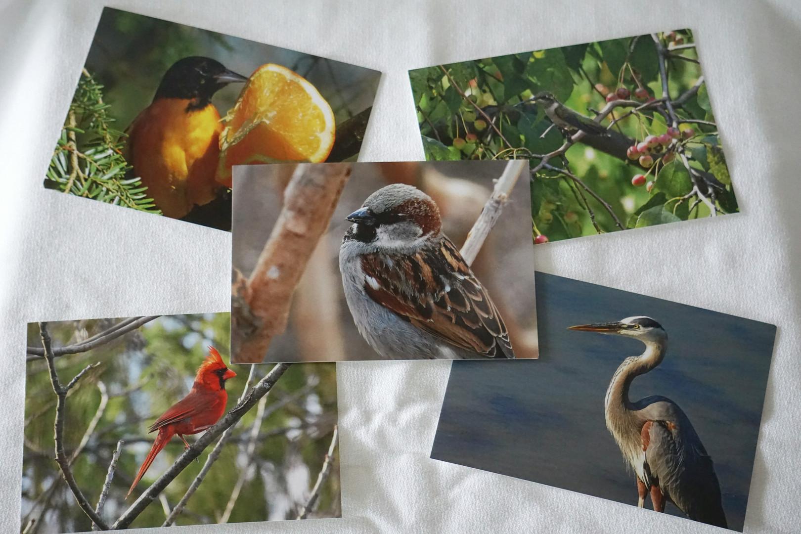 BirdPostcards.JPG
