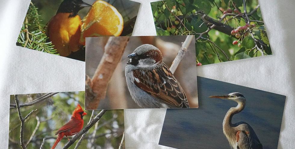 Bird Postcards Set of 10 Variety Pack | Stationery