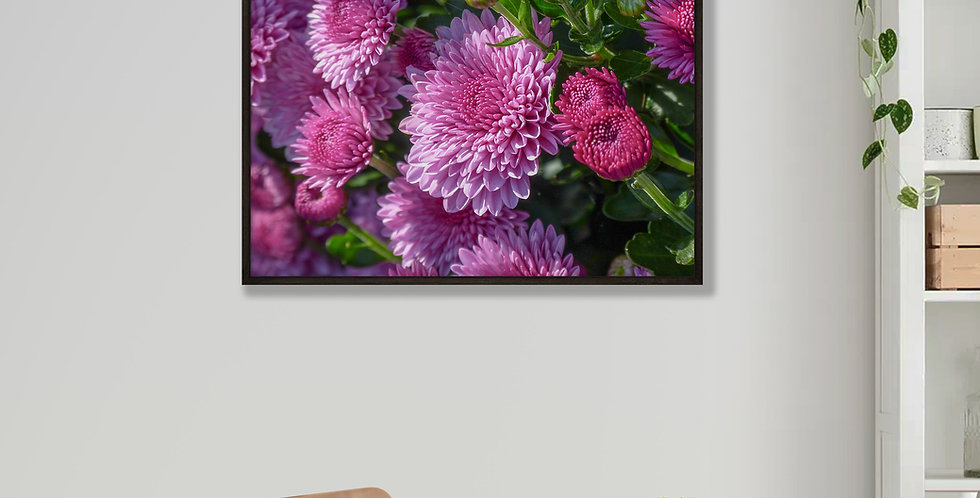 Pink Chrysanthemums Framed Print 16 x 20