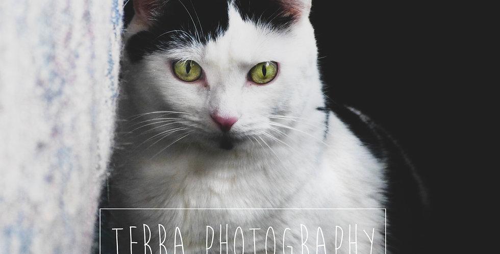 Black and White Cat Print