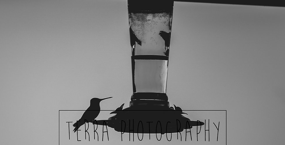 B&W Hummingbird Silhouette Print