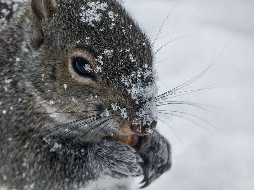 ColdSquirrel.jpg