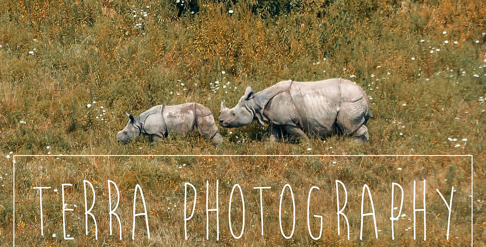 Rhino Mother With Child Print