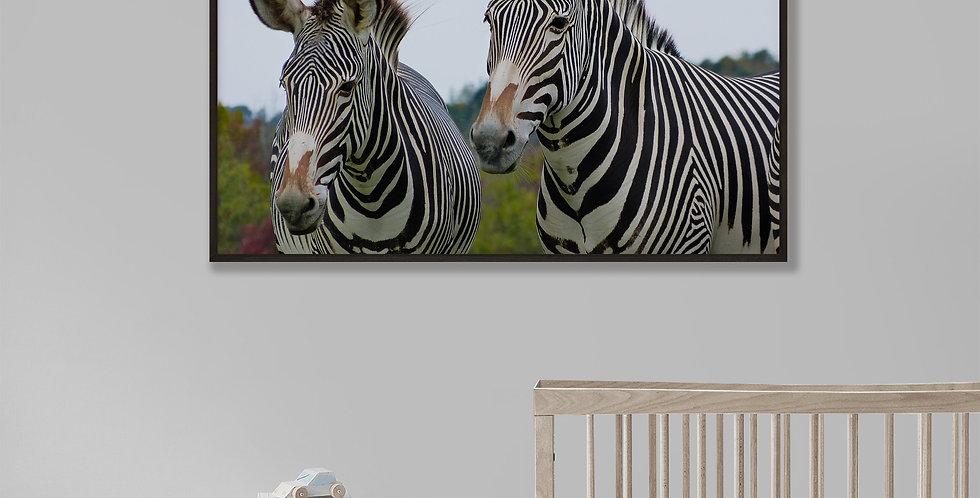 Zebra Framed Print 16 x 20