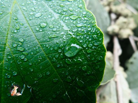 WaterDropletsLeafLowRes_20x15_Marked.jpg