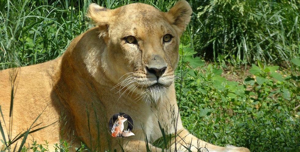 Lioness Print