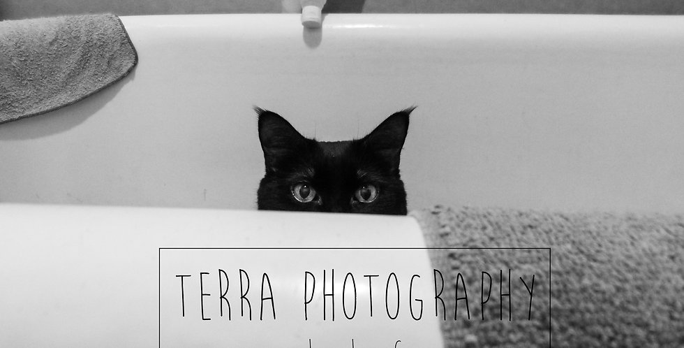 Cat in Bathtub Print