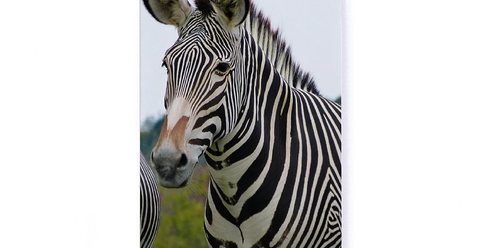 "Zebra Softcover Notebook 5.25"" x 8.25"" with Lined Pages"