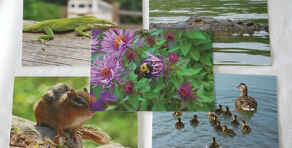 Animal Postcards Set of 10 Variety Pack | Stationery
