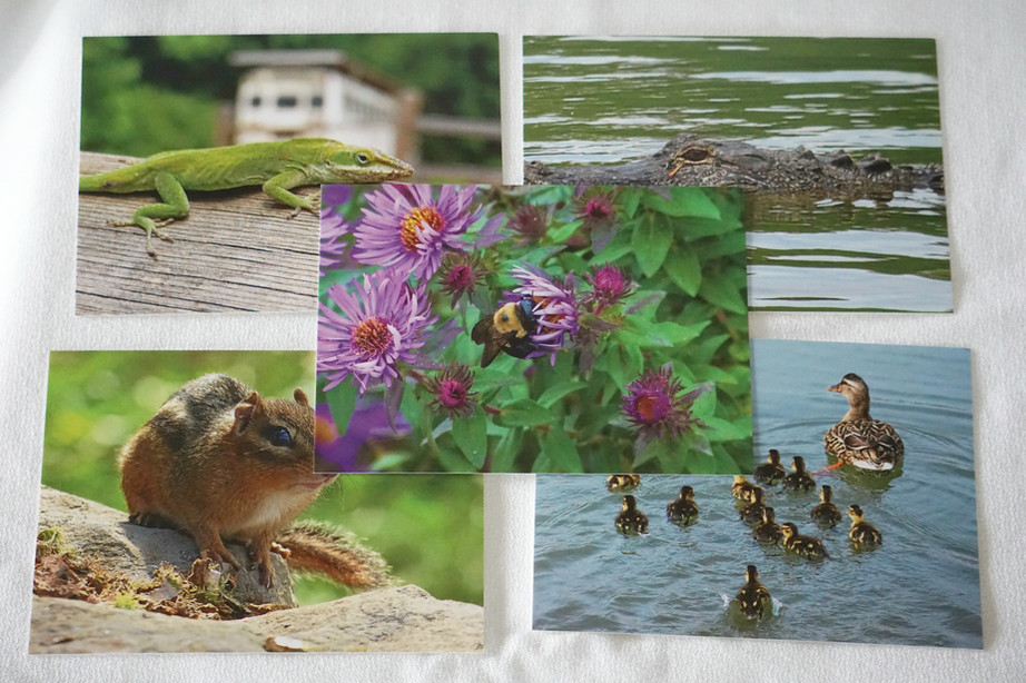 AnimalPostcards.JPG