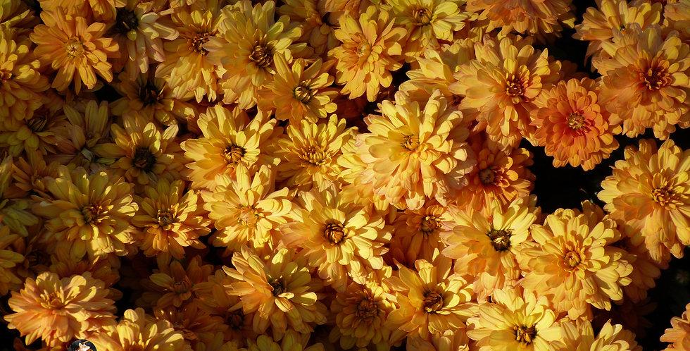 Golden Floral Print