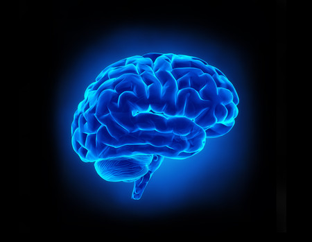 BrainforWebsite2.jpg