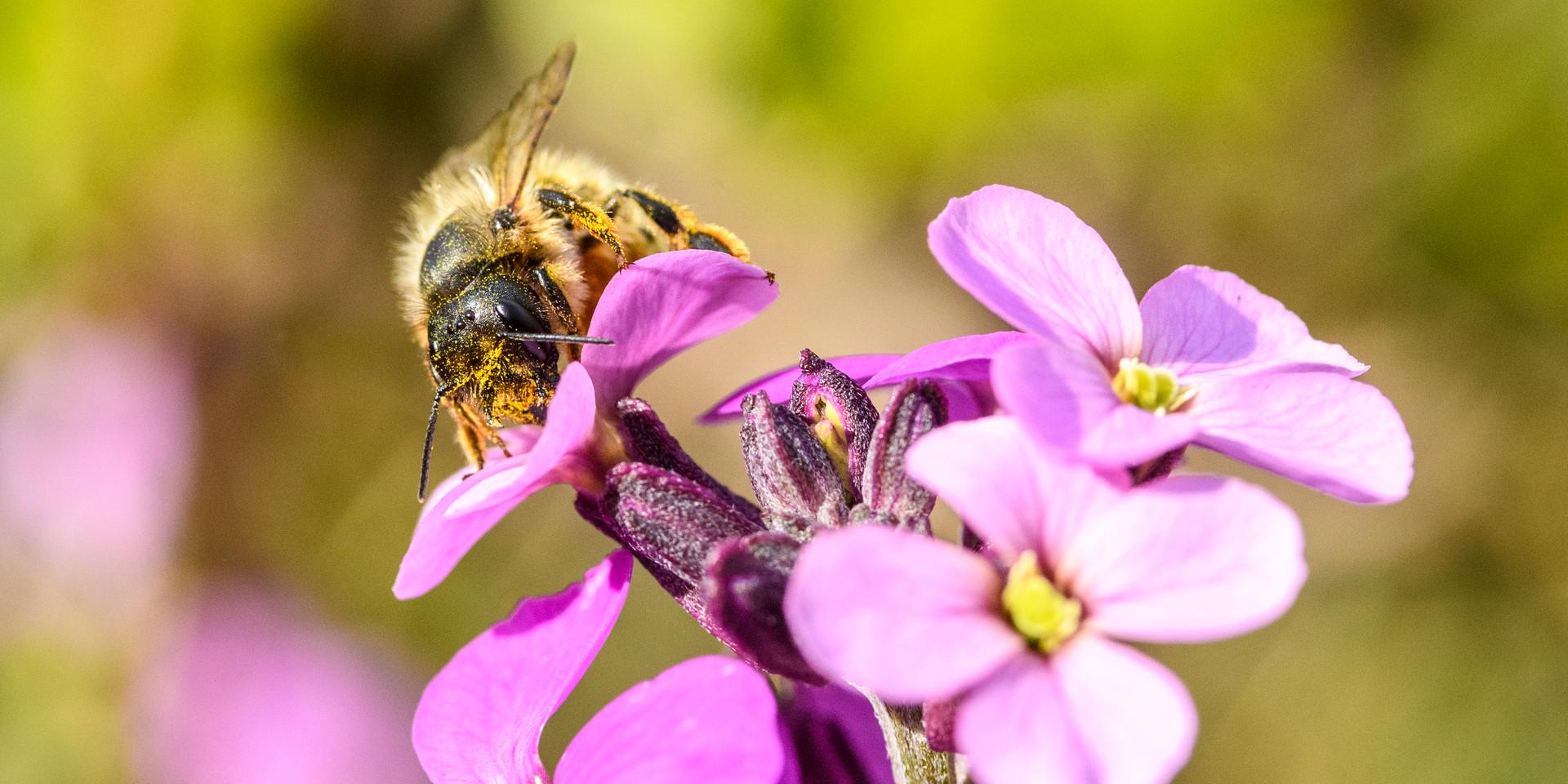 A face full of pollen