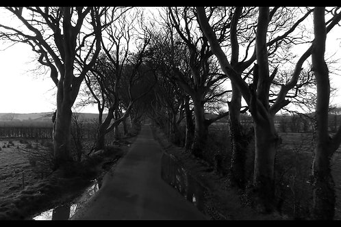 Dark Hedges - Black&White - 1