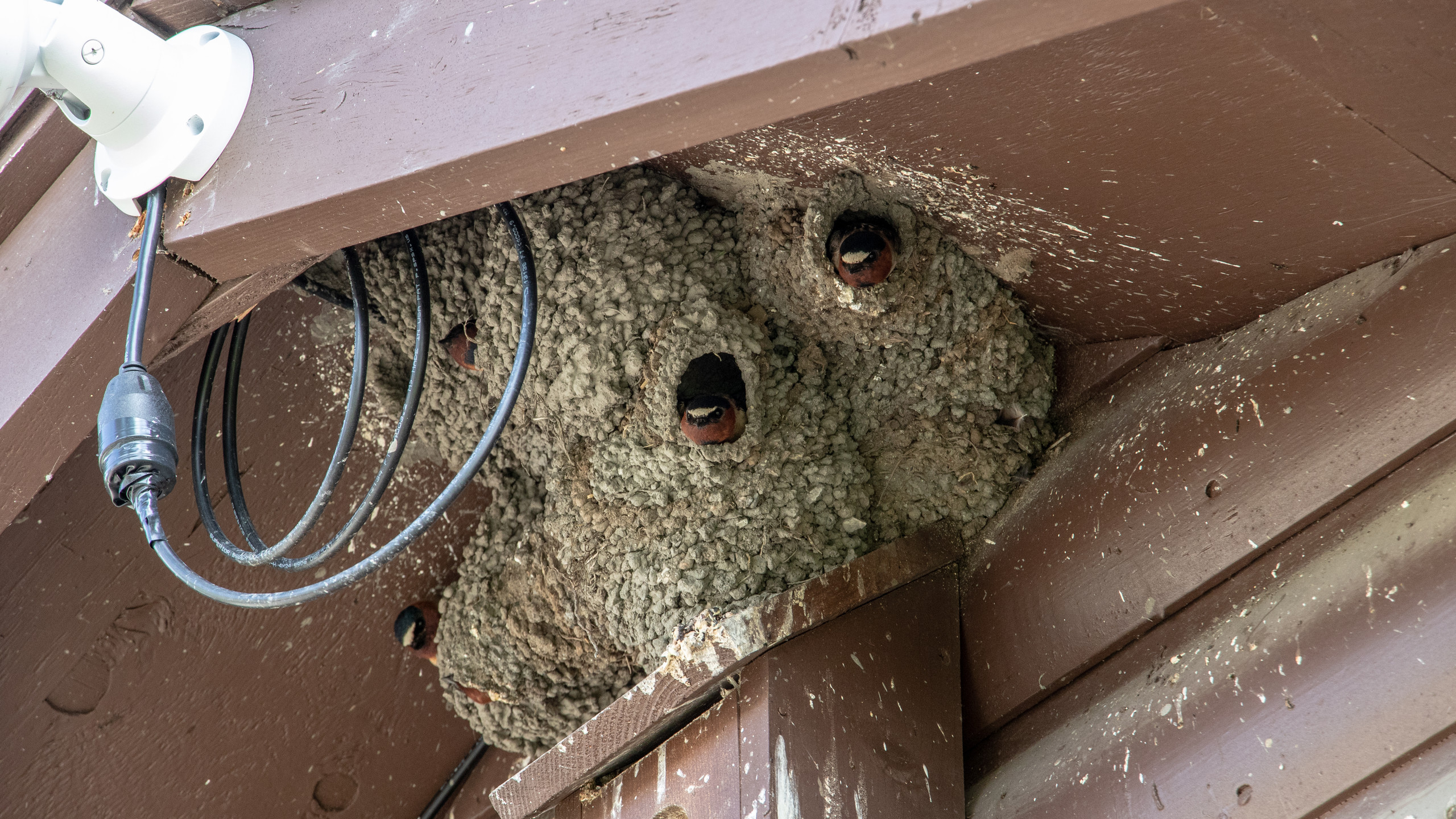 Cliff Swallow Apartments