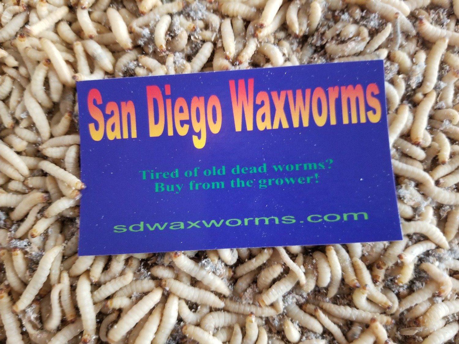 Don't buy dead worms!