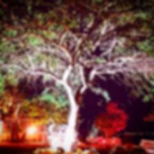 IMG-20161118-WA0002.jpg