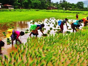 Cisco Launches Agri Challenge To Enable The Agritech Startup Ecosystem In India