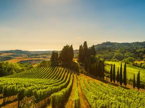 Introducing the Wine Region of Friuli-Venezia Giulia