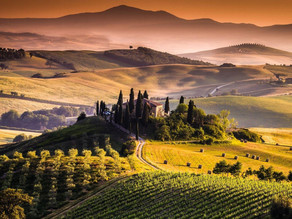 Discover The Ultimate Vineyards of Tuscany, Italy