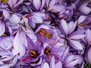 The Glorious Delight of Italian Saffron