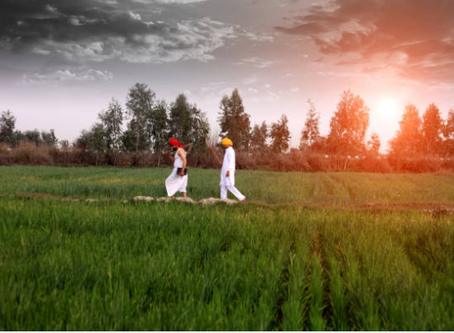 India Ranks First In The Number Of Organic Farmers & Ninth In Terms Of Area Under Organic Farming