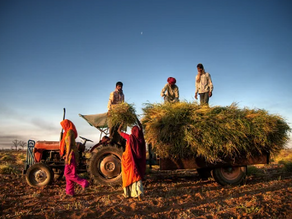 Major reformations in the Indian Agricultural Market