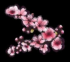 פרחים צבעוניים רקע שקוף.png
