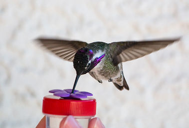 Nectar DOTS handheld hummingbird feeders - Easy to Use - Made in the USA!