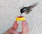 Nectar DOTS Hummingbird Feeder Nature Products USA - Handheld Feeder